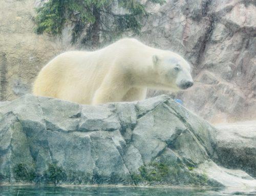 いつかの動物園